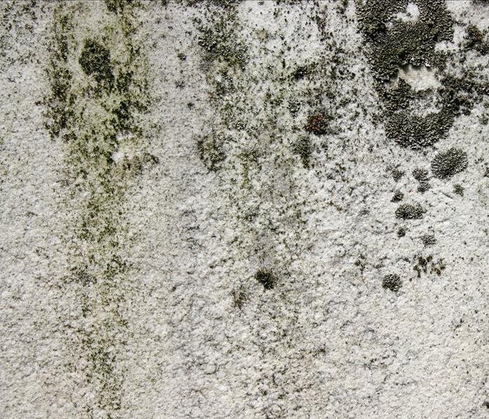Mold Remediation Mildew Vs Mold. Mildew Vs Mold   SERVPRO of North Utah County